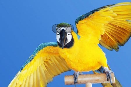 blue and gold macaw parrot standing on perch wearing large glasses