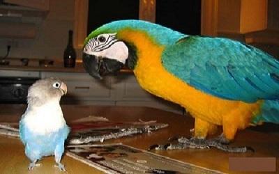 Comment Choisir Un Oiseau De Compagnie Bird And You