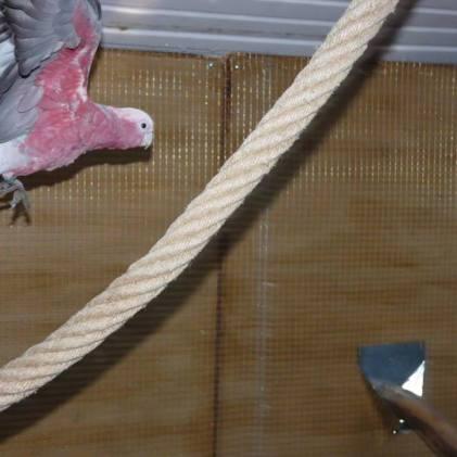 Construction volière pour perroquet