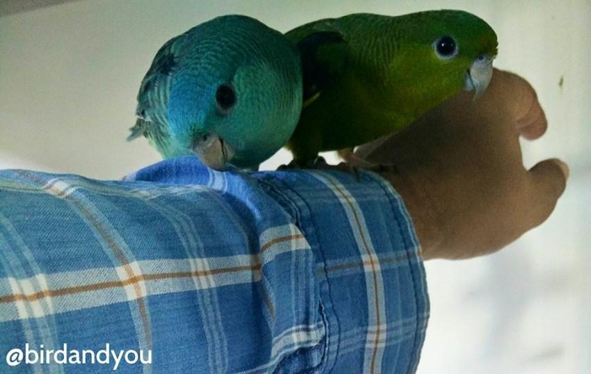 chosir un oiseau de compagnie