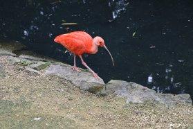 Ibis birdandyou 1