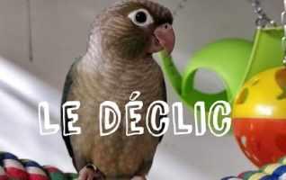 Le déclic, existe-t-il chez nos oiseaux de compagnie?