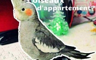 Oiseaux pour appartement, lequel choisir?
