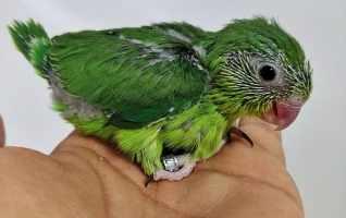 Évolution des bébés touis céleste en photos