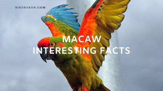 51 Macaw Interesting Facts Every Bird lover Knows