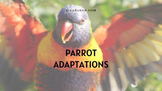 Parrot Adaptations – How Do Parrots Survive?