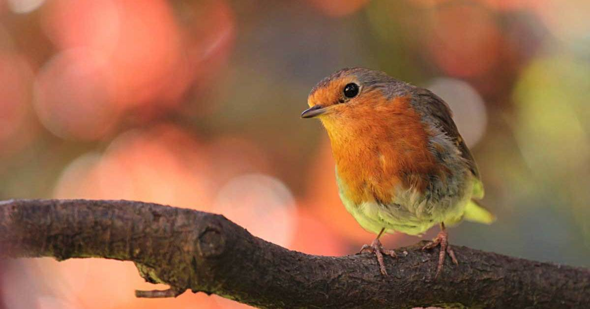 25 Amazing Facts about Birds Readers Find Very Interesting