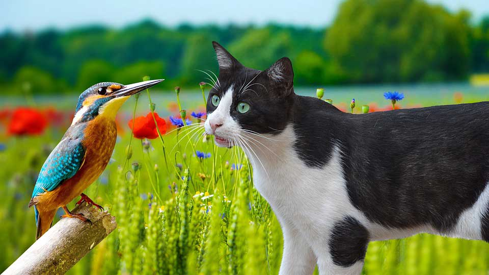 How to Safely Keep Pets and Birds Together at Your Home