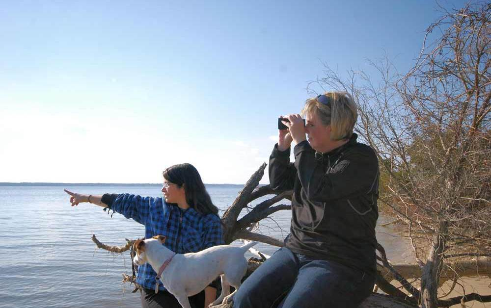 9 Things To Consider For Choosing Binoculars for Bird Watching