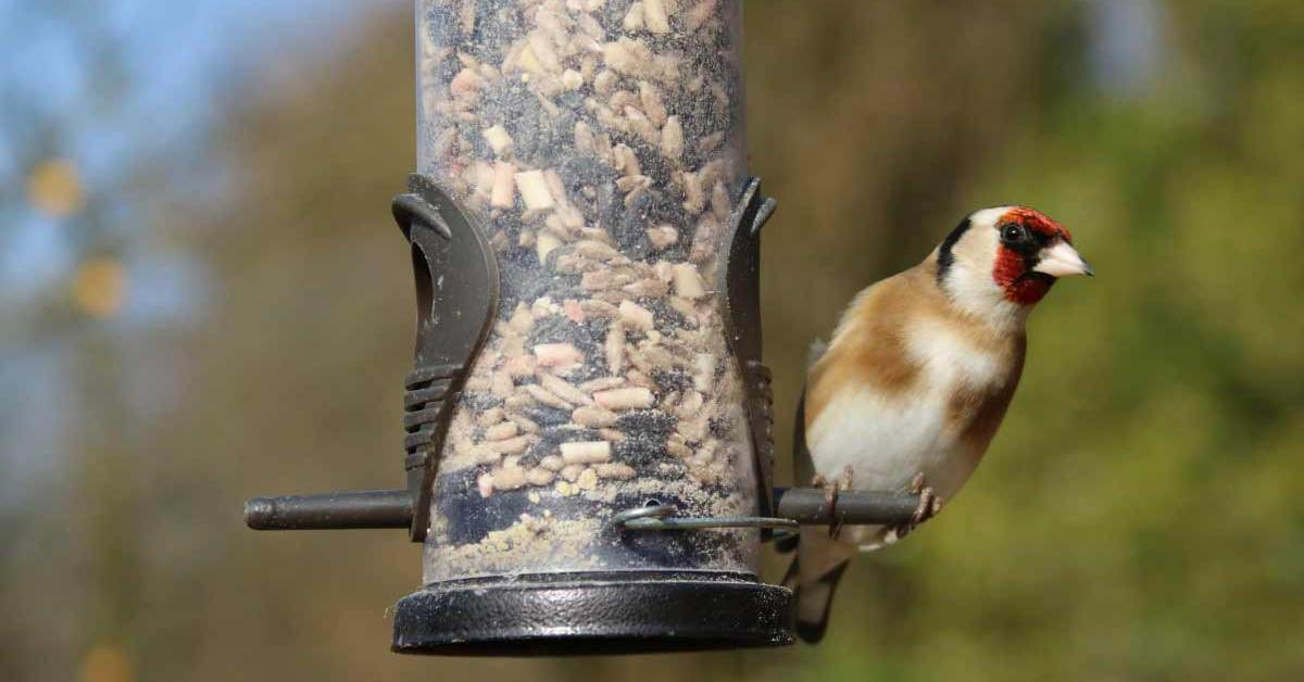 7 Crucial Points to Remember On How to Feed A Wild Bird
