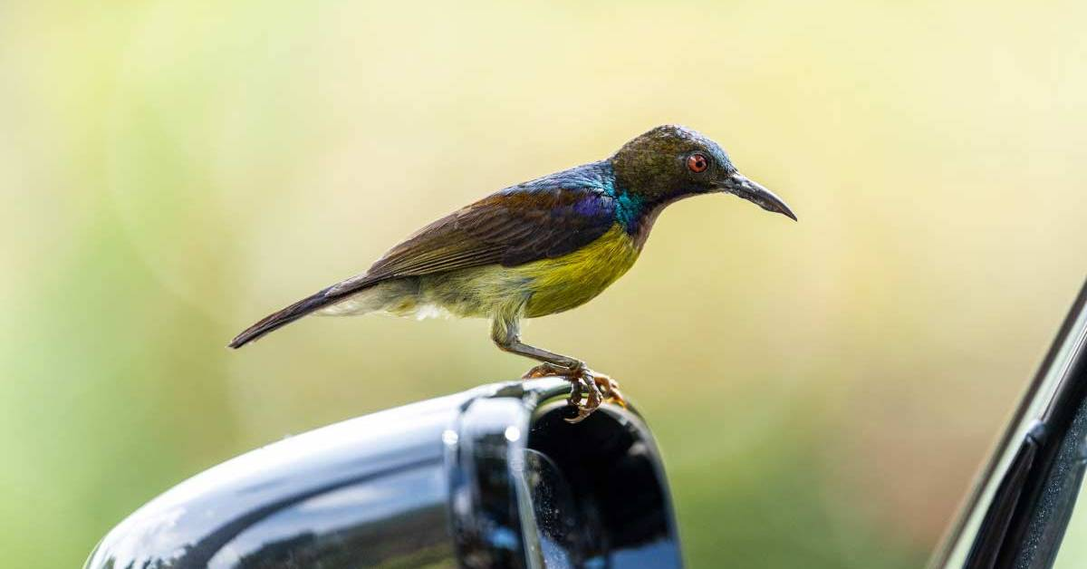 7 Things To Keep In Mind While Traveling With Birds By Car