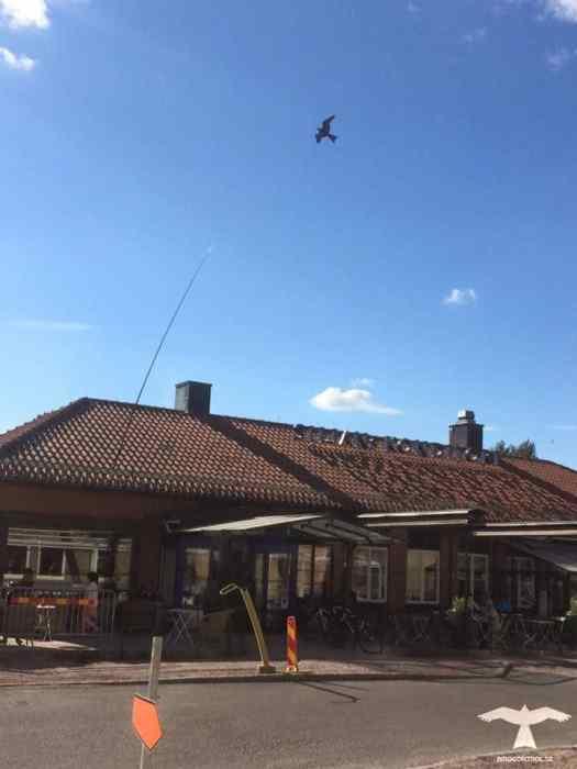 Flygande fågelskrämma drake uppsatt på taket på Konditori Siljan i Leksand