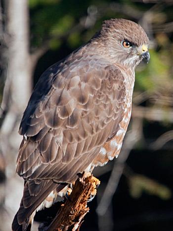 Birdfinders  Birdwatching Holidays  Canada