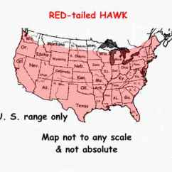 Desert Hawk Diagram Wiring Of Car Stereo Pioneer Photographs Red Tailed Hawks And The Birds On Arizona To Go Back Project Click Above Map Photo