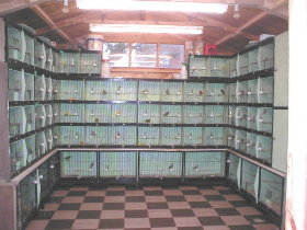 My Breeding Cages