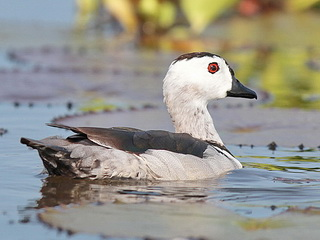Birding Peninsular Thailand Birdwatching trip report from Birding2asiacom