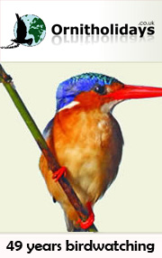 Ornitholidays
