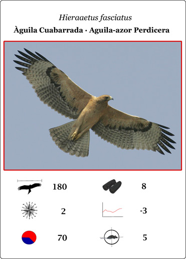 The Bonelli's Eagle card from the Raptor game