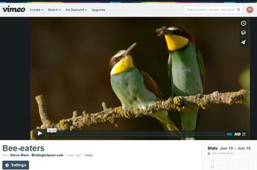 Beautiful Bee-eater video taken from bird photo hide in Catalonia.