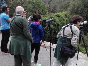 Watching Brown Bears in Asturias