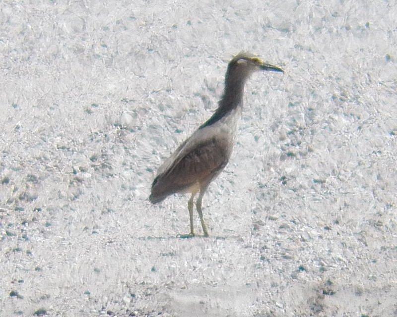 Birding in Garden County Nebraska