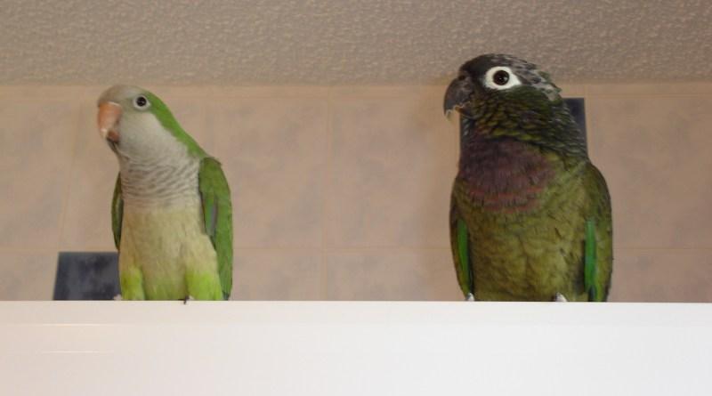 Max and Kiwi