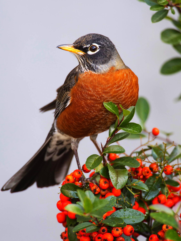 Birds Of Connecticut Common