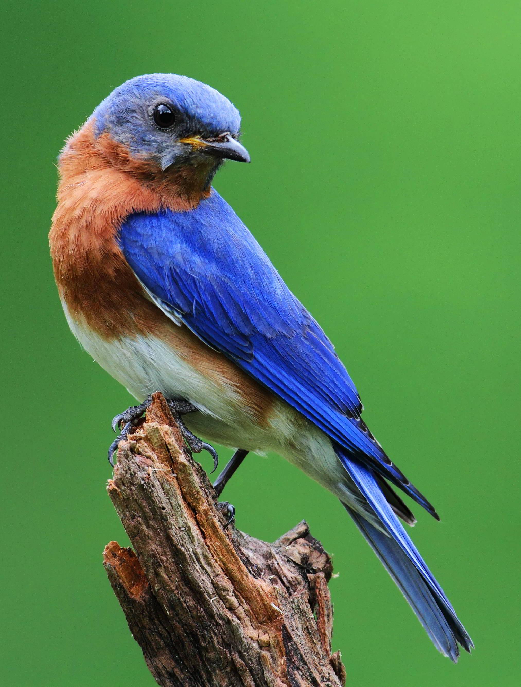 Birds Of Missouri Identification