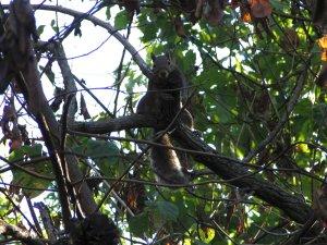 feed squirrels