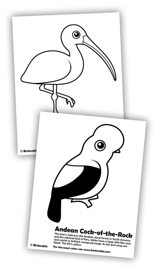 Ibis and Andean Cock-of-the-rock Coloring Pages in