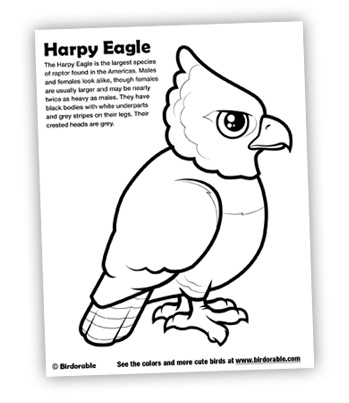 New Coloring Pages for Harpy Eagle, Lilac-breasted Roller