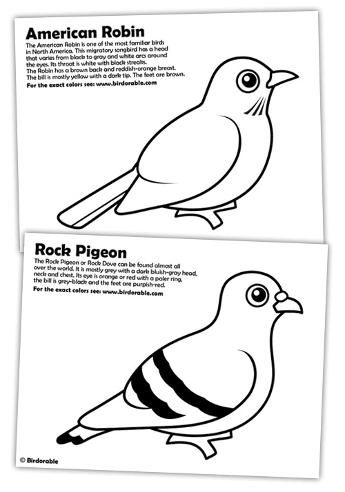 Rock Pigeon and American Robin Coloring Pages in Coloring