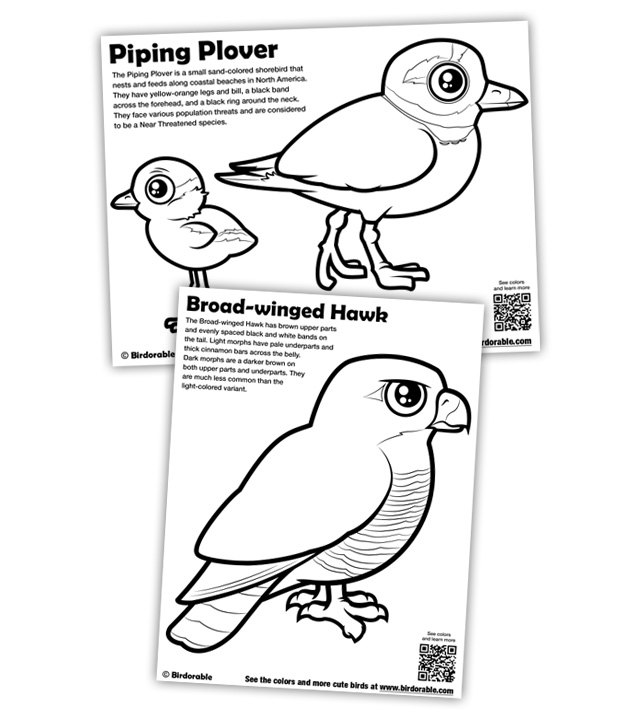 New Coloring Pages: Piping Plover and Broad-winged Hawk in