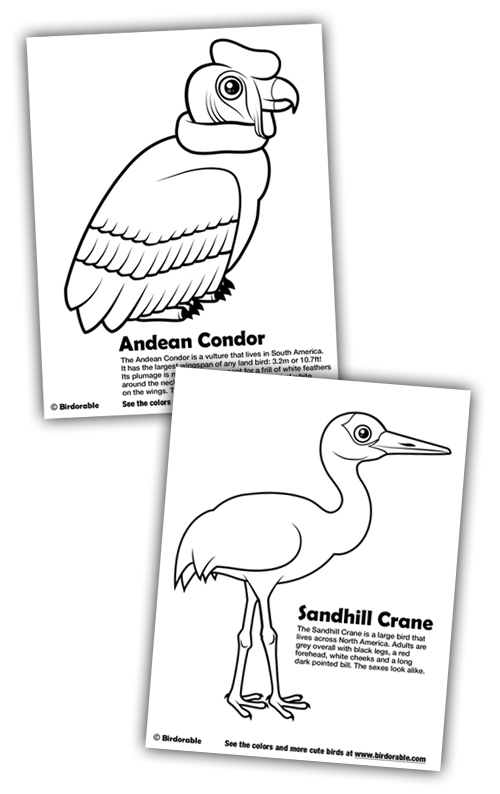 New Coloring Pages: Andean Condor and Sandhill Crane in