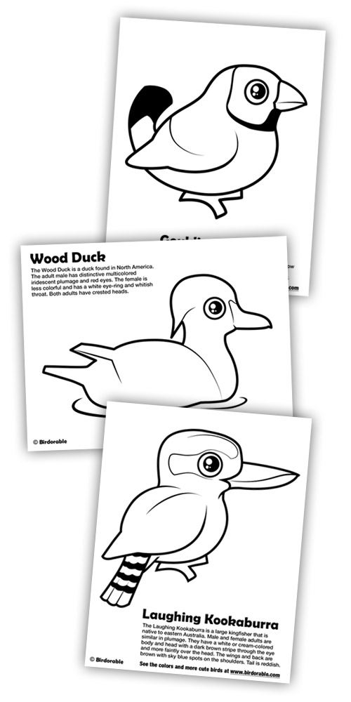 3 New Coloring Pages: Gouldian Finch, Wood Duck
