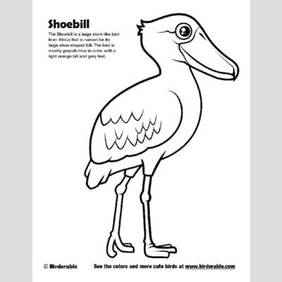 Shoebill Coloring Page