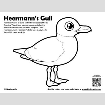 Heermann's Gull Coloring Page
