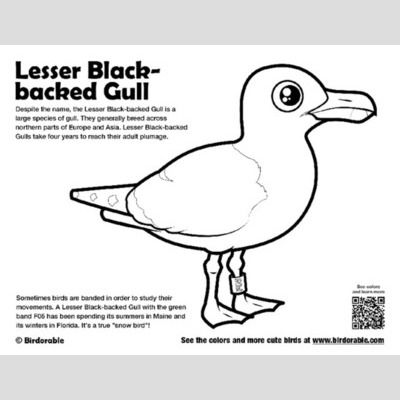 Lesser Black-backed Gull Coloring Page