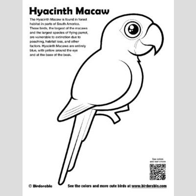 Hyacinth Macaw Coloring Page