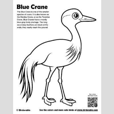 Blue Crane Coloring Page