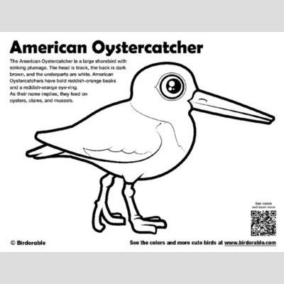 American Oystercatcher Coloring Page