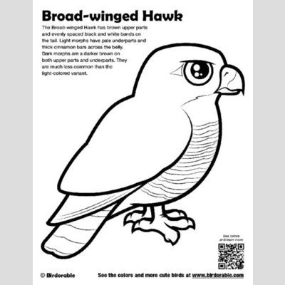 Broad-winged Hawk Coloring Page