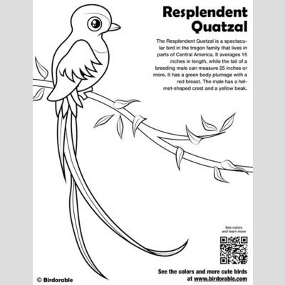 Resplendent Quetzal Coloring Page