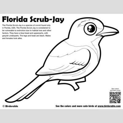 Florida Scrub-Jay Coloring Page