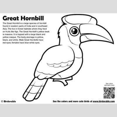 Great Hornbill Coloring Page