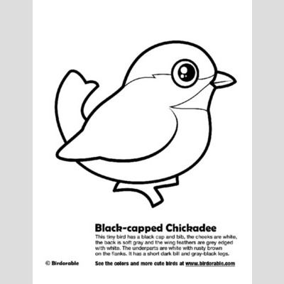 Black-capped Chickadee Coloring Page
