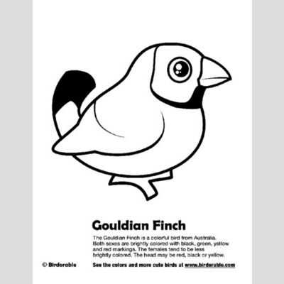 Gouldian Finch Coloring Page