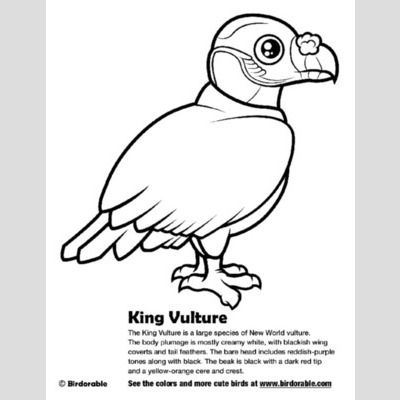 King Vulture Coloring Page
