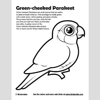 Green-cheeked Parakeet Coloring Page