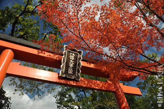 Momiji au Japon